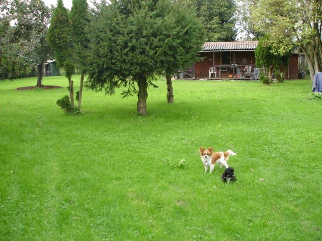 Bungalow Nähe Bern, Murten 4