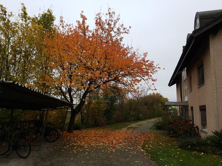 Grosse, helle 4.5-Zi-Wohnung in Zuchwil 4528 Zuchwil