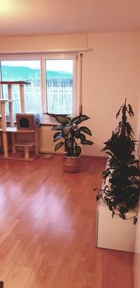 2.5 Zimmer Wohnung in Schwadernau